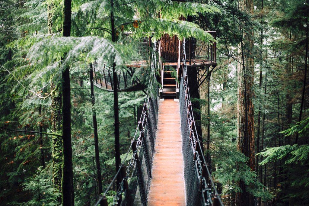 séjour insolite dans une cabane dans un arbre - séjour atypique
